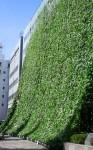 大型緑のカーテン