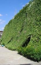 学校用緑のカーテン