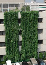 板橋区役所緑のカーテン