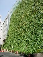 日本最大28mの杉並区役所緑のカーテン
